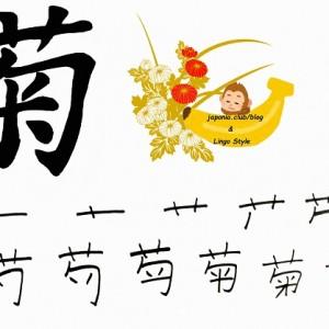 Learn Kanji every day – Kanji 71: 菊 (chrysanthemum)